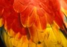 Close-Ups_10