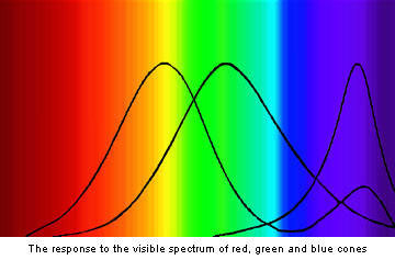 Human perception of colour